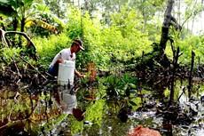 Khai thác đặc sản cá thòi lòi Đất Mũi