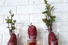"""""""Hô biến"""" rau củ  thành cây cảnh"""