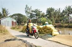Điểm nghẽn trong chuỗi sản xuất lúa, gạo - Bài 1: Thiếu hợp tác bền vững