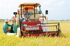Điểm nghẽn trong chuỗi sản xuất lúa, gạo - Bài 2: Chú trọng hoạt động liên kết