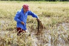 Vùng sản xuất ngọt hoá ngày càng thu hẹp - Bài 1: Thuỷ lợi chưa đáp ứng nhu cầu