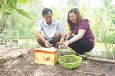 Chín Lam: Kể chuyện nuôi tôm