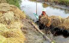 Kỹ sư cùng nông dân làm lúa chất lượng cao
