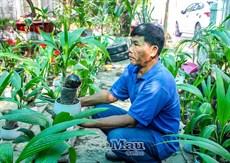 Bonsai dừa - cây mini giá tiền triệu