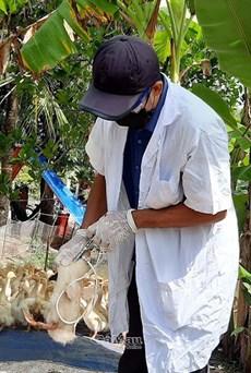 Xuất hiện ổ dịch cúm gia cầm tại ấp Đất Sét, xã Phú Thuận