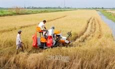Cần cải tiến kỹ thuật cho máy gặt đập trên đất lúa - tôm