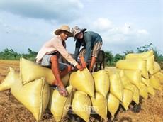 Ngành nông nghiệp khởi động đầu xuân