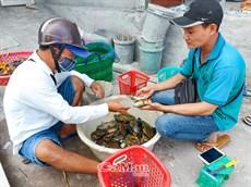 Lao động việc làm ở nông thôn cần hướng đi bền vững