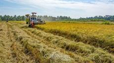 6 tháng đầu năm, giá trị xuất khẩu nông lâm thuỷ sản tăng mạnh