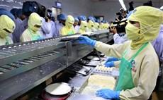 Gỡ khó cho Công ty Thuỷ sản Minh Phú