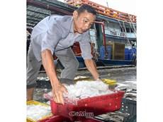 Ngư dân cần trợ lực để bám biển