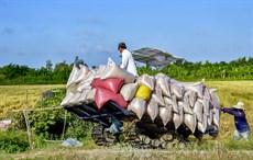 Nông dân Cà Mau thích ứng để phát triển