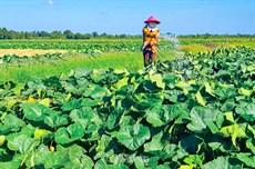 Khánh Bình Ðông nỗ lực vì nông thôn mới
