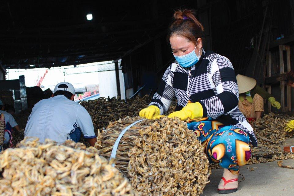 Cá khoai sau khi phơi đủ nắng sẽ được đem vào phân cỡ và bó lại bán cho thương lái.