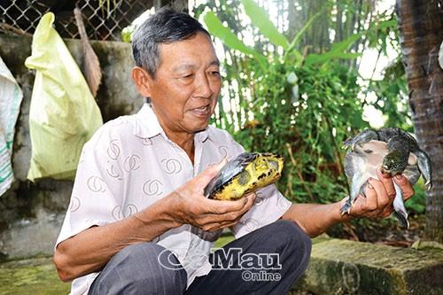 Với ông Nguyễn Thanh Lùng, con ba ba có duyên nợ kỳ lạ và trở thành nguồn thu nhập kinh tế ổn định.