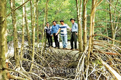 Những cây cầu khỉ được nối xuyên rừng mang đến cho du khách trải nghiệm thú vị.